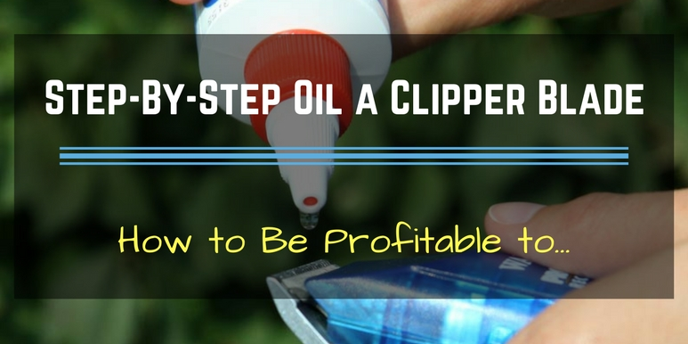 Step-By-Step Oil a Clipper Blade